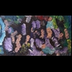 thumbnail Sea Horses Painting - Energy Oil Paintings - eop -